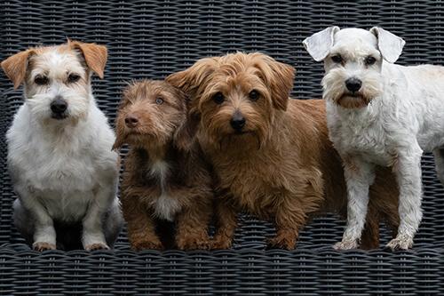 Begeleiding Bij De Keuze Van Een Hond Hondencoach Ariane