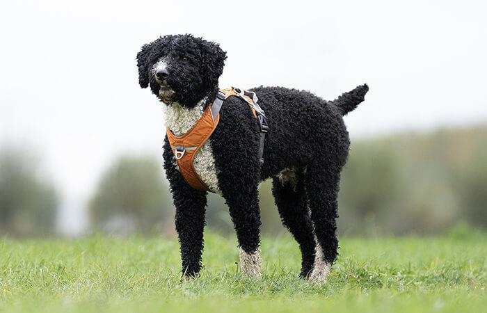 De Visie Van Hondencoach Ariane Willocx