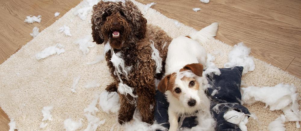 Probleemgedrag Bij Honden Hondencoach Ariane Willocx Reet