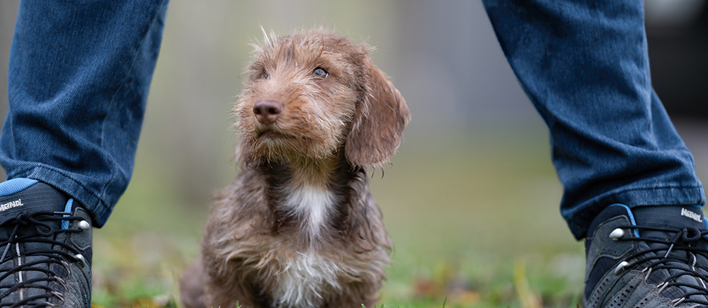 Puppy Opvoeden Hondencoach Ariane Willocx Reet